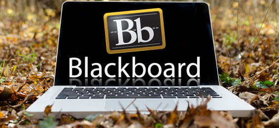 Holding a Course Entitled 'Blackboard and E-Content Upload' at the College of Engineering