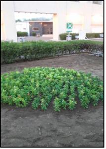 قسم التوعية بكلية الصحة تنظم حملة توعوية لتعزيز أهمية الزراعة وعلاقتها بالبيئة